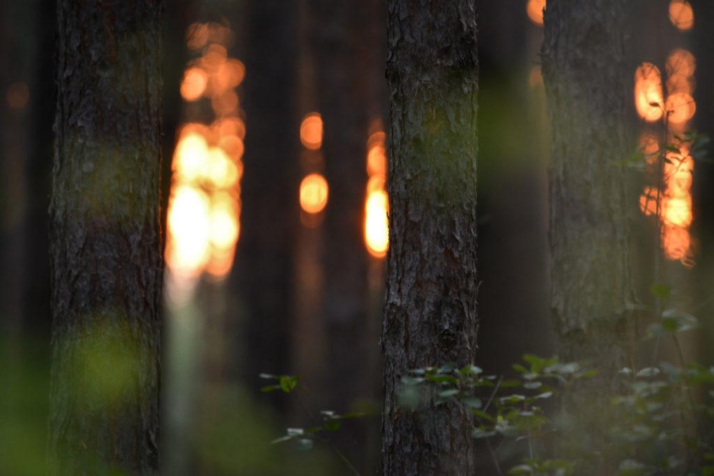 Abenddämmerung hinter Bäumen © Marcel Gluschak