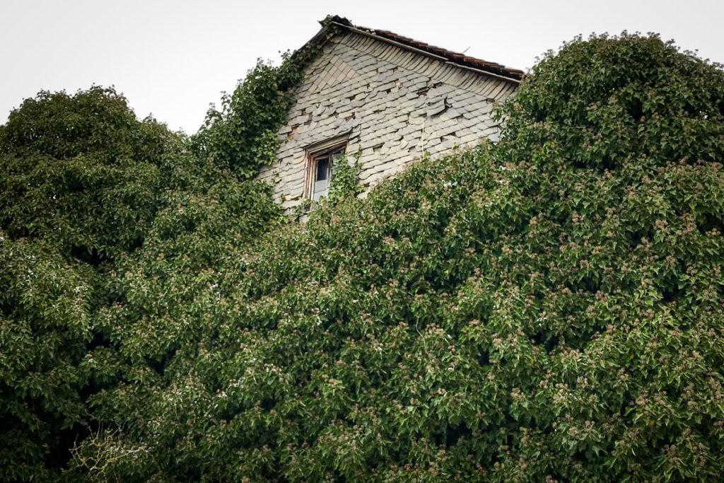 Überwuchertes Haus © Marcel Gluschak