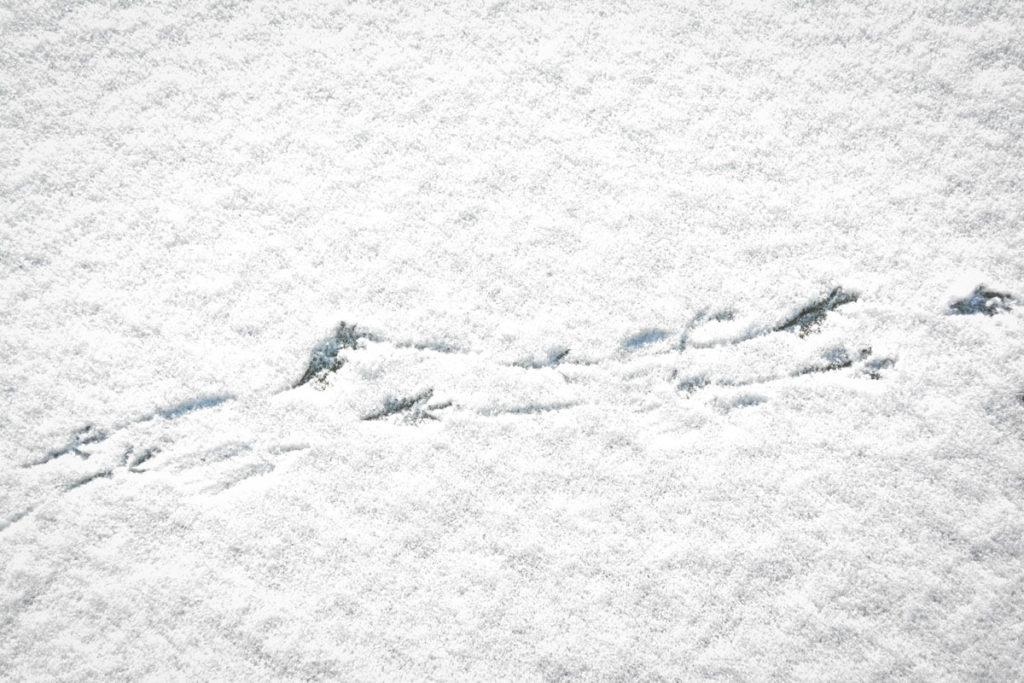 Elsterspur im Schnee © Marcel Gluschak